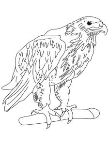 Eagle-birds-coloring-pages-10
