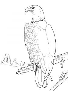Eagle-birds-coloring-pages-19