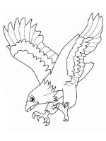 Eagle-birds-coloring-pages-20