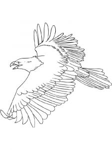 Eagle-birds-coloring-pages-21