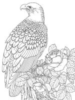 Eagle-birds-coloring-pages-5