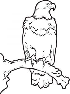 Eagle-birds-coloring-pages-7