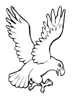 coloring-pages-Eagle-10
