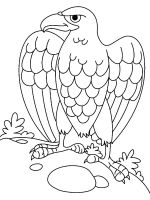 coloring-pages-Eagle-14