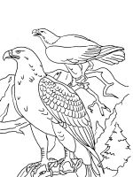 coloring-pages-Eagle-15