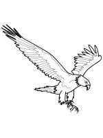 coloring-pages-Eagle-16