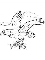 coloring-pages-Eagle-17