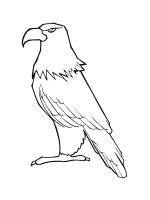 coloring-pages-Eagle-3