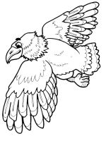 coloring-pages-Eagle-8