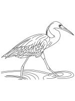 Egrets-birds-coloring-pages-10