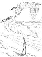 Egrets-birds-coloring-pages-11