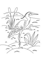 Egrets-birds-coloring-pages-4