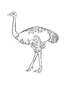 Emu-birds-coloring-pages-10
