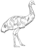Emu-birds-coloring-pages-11