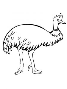 Emu-birds-coloring-pages-13