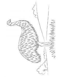 Emu-birds-coloring-pages-3