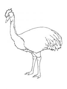 Emu-birds-coloring-pages-5