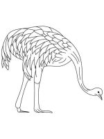 Emu-birds-coloring-pages-9