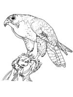 Falcons-birds-coloring-pages-14