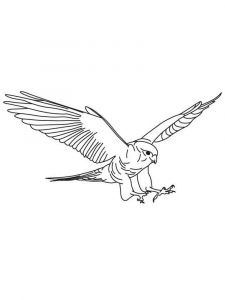 Falcons-birds-coloring-pages-3