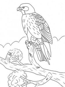 Falcons-birds-coloring-pages-4
