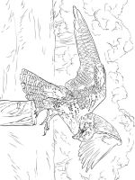 Falcons-birds-coloring-pages-7
