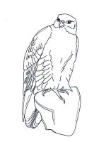 Falcons-birds-coloring-pages-8