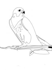 Falcons-birds-coloring-pages-9