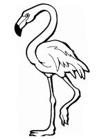 Flamingos-birds-coloring-pages-20