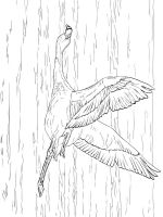 Flamingos-birds-coloring-pages-5