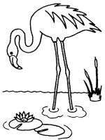 Flamingos-birds-coloring-pages-7