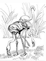 Flamingos-birds-coloring-pages-8