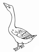 Gooses-birds-coloring-pages-1