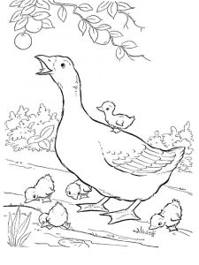 Gooses-birds-coloring-pages-10
