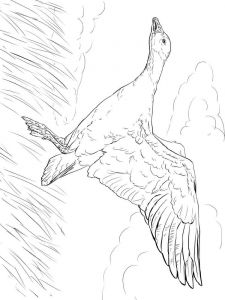 Gooses-birds-coloring-pages-15