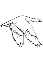 Gooses-birds-coloring-pages-19