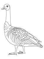 Gooses-birds-coloring-pages-7