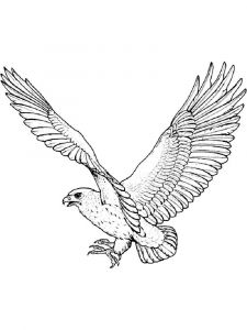 Hawks-birds-coloring-pages-16