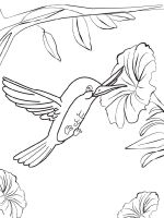 Hummingbirds-birds-coloring-pages-1
