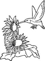 Hummingbirds-birds-coloring-pages-10