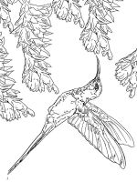 Hummingbirds-birds-coloring-pages-11