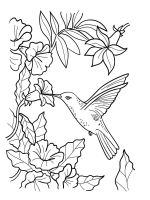 Hummingbirds-birds-coloring-pages-14