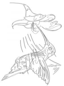 Hummingbirds-birds-coloring-pages-15
