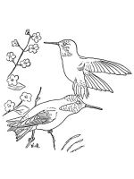 Hummingbirds-birds-coloring-pages-17