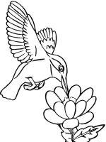 Hummingbirds-birds-coloring-pages-6
