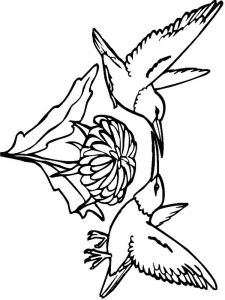 Hummingbirds-birds-coloring-pages-7