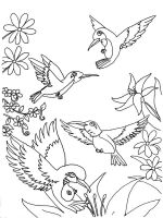 Hummingbirds-birds-coloring-pages-8