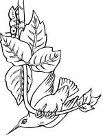 Hummingbirds-birds-coloring-pages-9