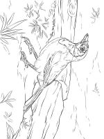 Jay-birds-coloring-pages-10