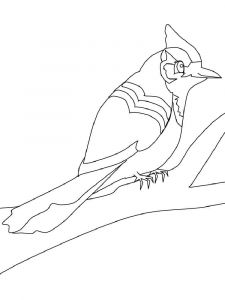 Jay-birds-coloring-pages-7
